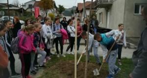 Počela  sadnja drveća i uređenje ulaza u grad