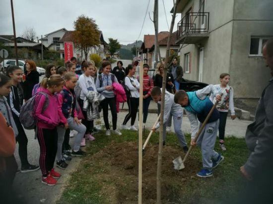 sadnja drveca 3