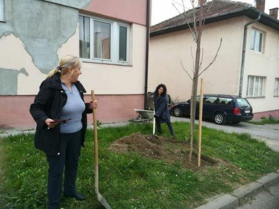 sadnja drveca