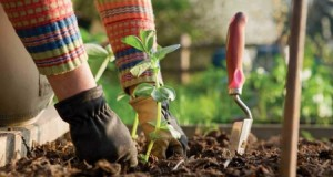 Помоћ пољопривредним произвођачима за прољетну сјетву