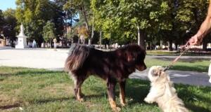"""Počela realizacija projekta """"Upravljanje populacijom pasa na prostoru opštine Rudo"""""""